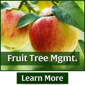 rasmussen-spray-service-fruit-tree-management