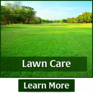 rasmussen-spray-service-lawn-care