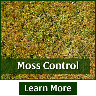 rasmussen-spray-service-moss-control