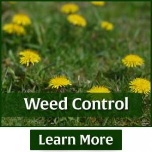 rasmussen-spray-service-weed-control