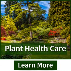 rasmussen-spray-service-plant-health-care